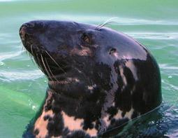 Seal spotting trips.