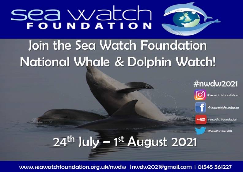 Join the Sea Watch Foundation national whale and dolphin watch: 24th July - 1st August 2021